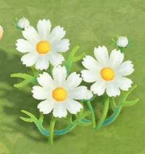 動物森友會-波斯菊