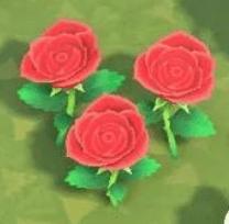 動物森友會-玫瑰