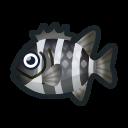 動森-條石鯛