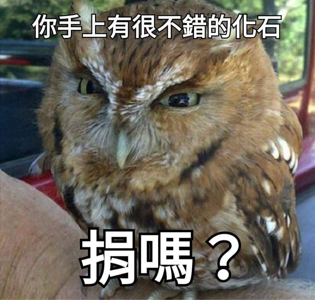 動森-貓頭鷹