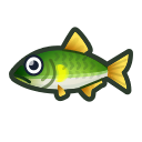 動森-香魚
