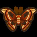 動森-皇蛾