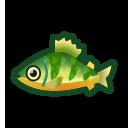 動森-黃鱸魚